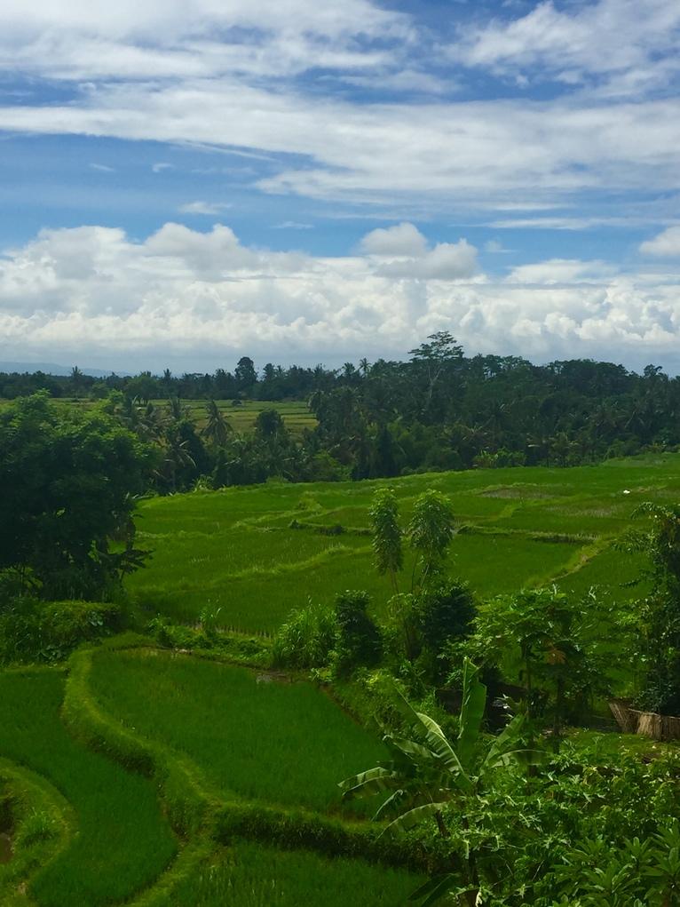 Blondynki na Bali - śniadanie dla Sziwy