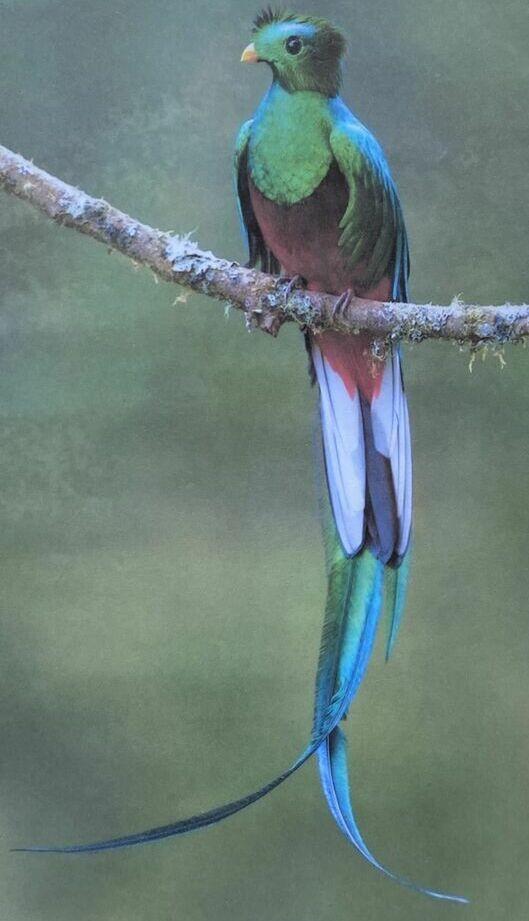 Święty ptak Majów.