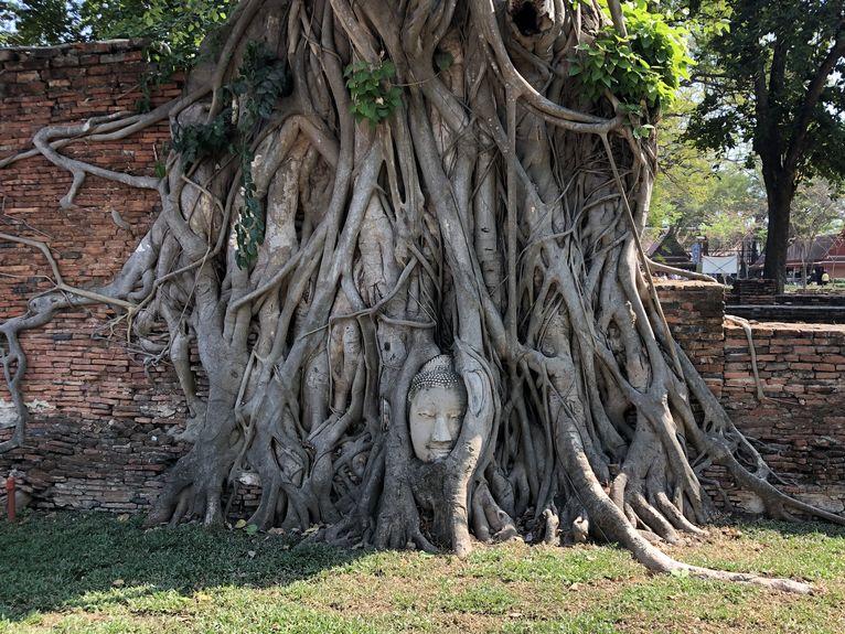 Ayuttaya słynny Buda w drzewie