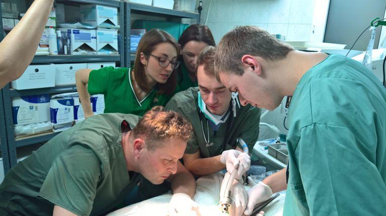 Zespół przy pracy, operuje dr Paweł Mucha, znieczula dr Robert Kraczkowski.