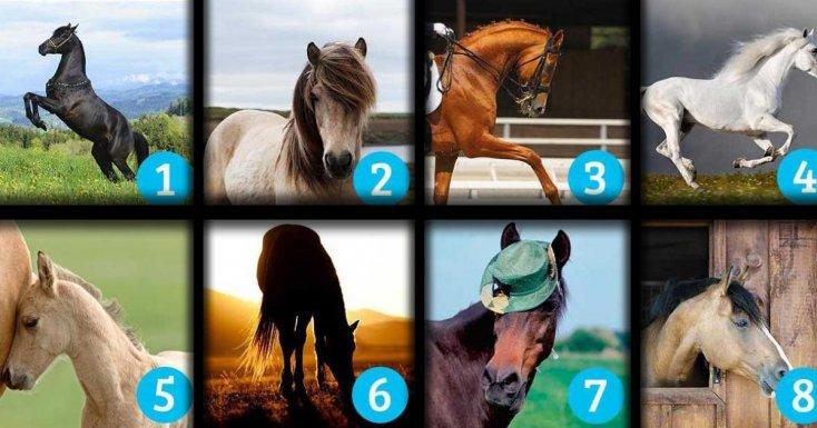test konie