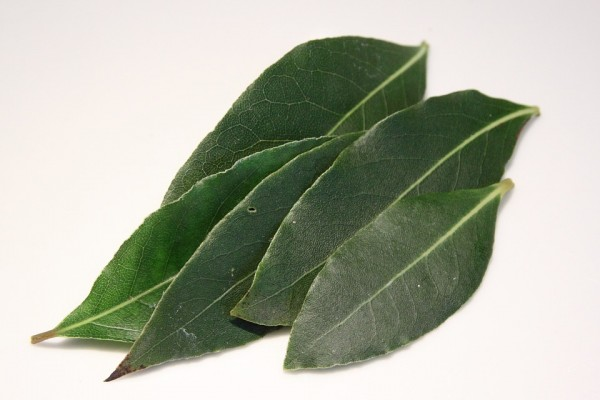 liście laurowe