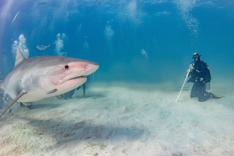 Wyspy Bahama. Nurkowanie z rekinami.
