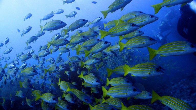 Malediwy, rafa koralowa.