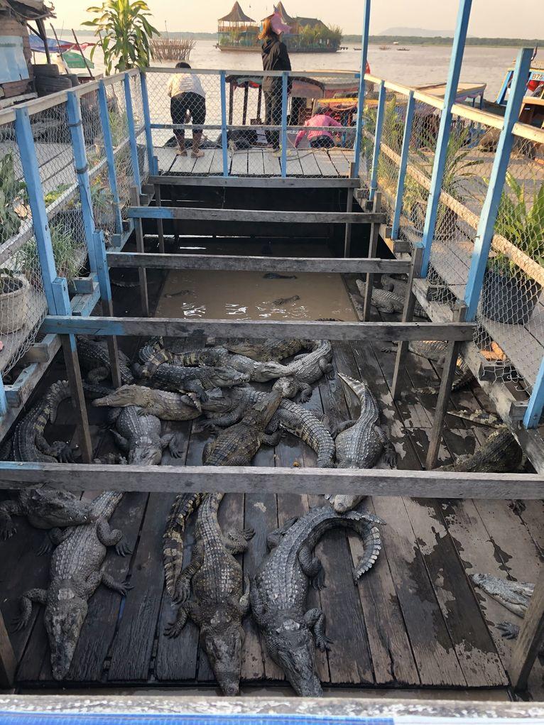 Krokodyle stłoczone w pływającej restauracji