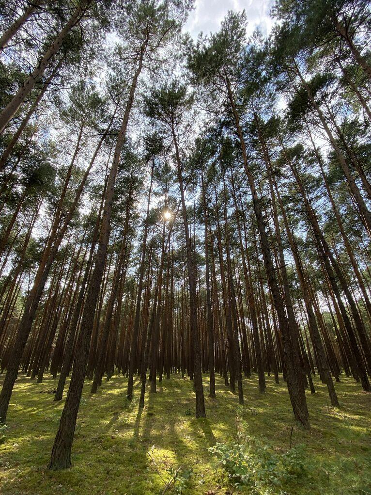 Ten las kryje wiele tajemnic.