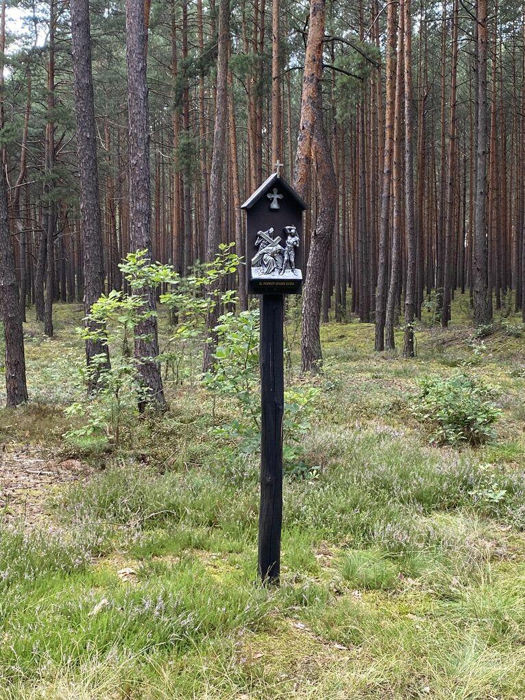 Do źródełka idzie się leśną drogą.