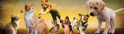 zwierzęta, psy, koty